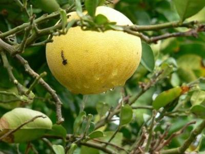 Eoné Přírodní silice - Grapefruit