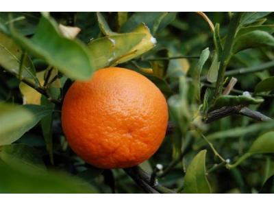 Eoné Přírodní silice - Mandarinka červená